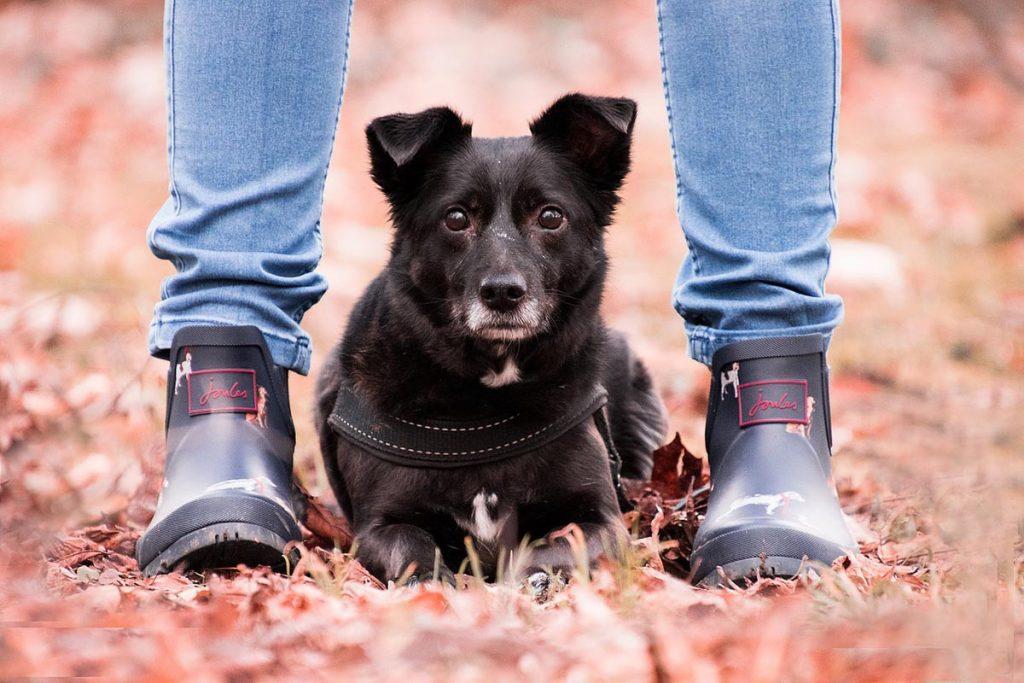 Hund Hellblaue Jeans Schuhe